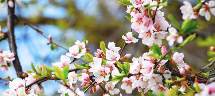 Spring is a wonderful time to enjoy shopping, dining, and the wonderful sights in Bethlehem, Lehigh Valley PA